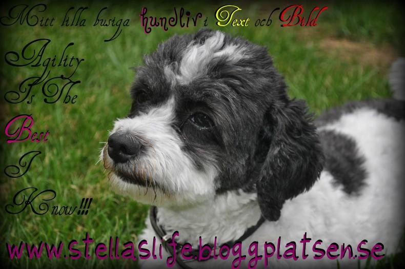 Agility Stella!!!